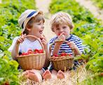 Fun Farms, U-Pick & Markets in Central Ontario - Summer Fun Guide