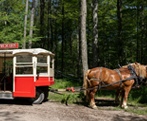 Sightseeing Tours in Central Ontario - Summer Fun Guide