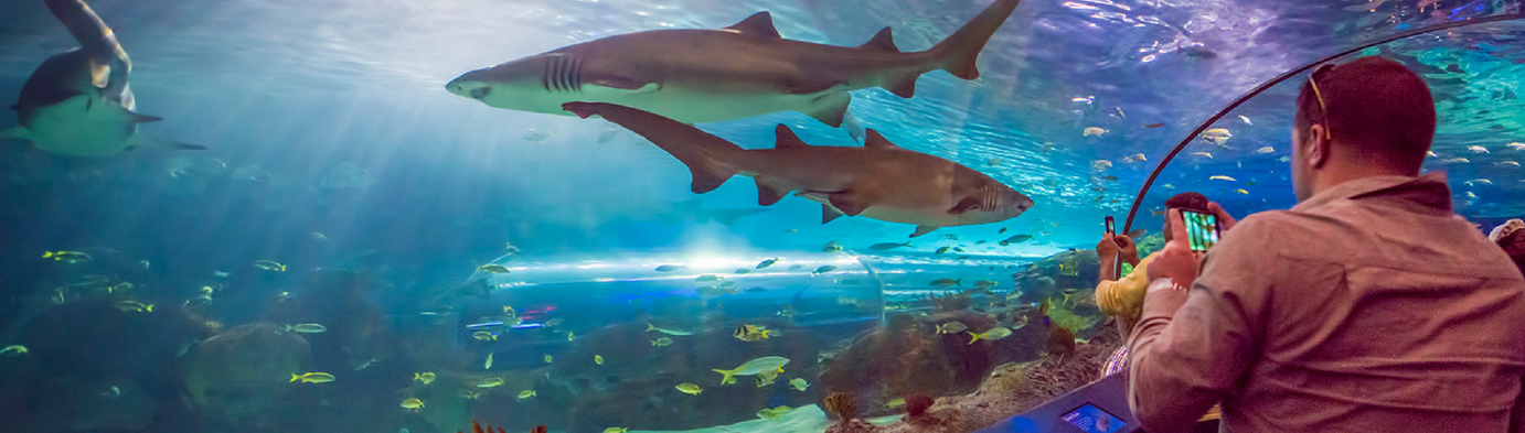 Sharks in Toronto (photo courtesy Ripley's Aquarium)
