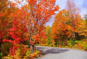 6 Fantastic Fall Activities