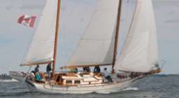 Sailboat charters Rogue Tiger
