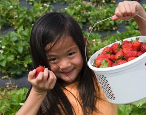 Asian girl picking strawberries