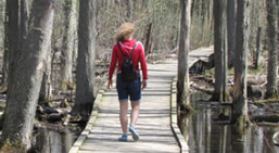 The Arboretum walking trails