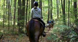 horseback riding in Ontario | summer fun guide