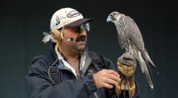 Falconry experience Hawkeye Birds