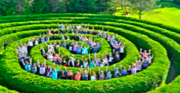 People standing in a hedge maze