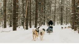 Person dogsledding