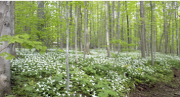 Forest with flowers