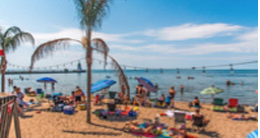 People on a beach with a palm tree