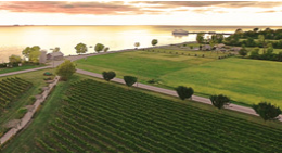 Arial view of wine fields at sunset