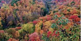 Ariel view of a forest during fall