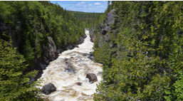 Rapids surrounded by forest