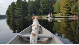 A dog in a canoe