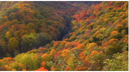 Ariel photo of a forest during fall
