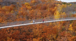 A suspension bridge overlooking a fall forest