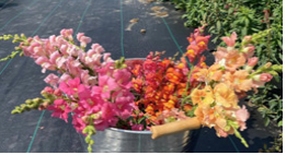 Assortment of coloured flowers