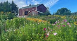 Barn in a field of flowers