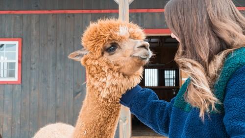 Private Alpaca Farm Tours-event-photo