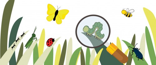 Outdoor Butterfly and Bug Hunt
