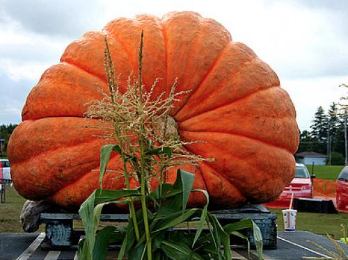 Port Elgin Pumpkinfest-event-photo