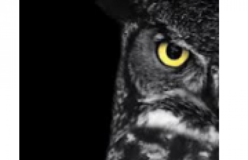 Ganaraska Region Conservation Authority's Owl Prowl