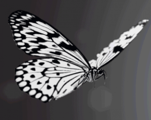 Flight of White - Experience a Snowball of Butterflies!-event-photo