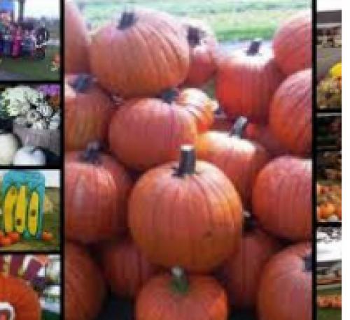 Talbotville Berry Farm and Haunted Corn Maze-event-photo