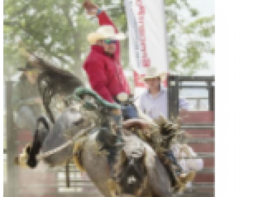 Norfolk Ram Rodeo-event-photo