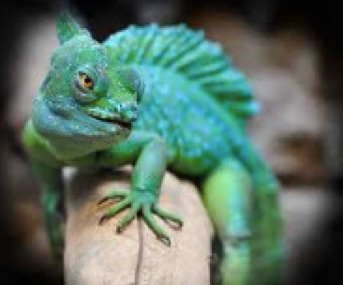 Toronto Reptile Expo: March 31st-event-photo