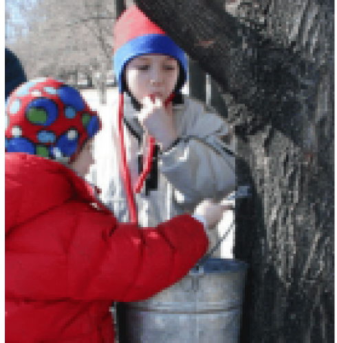 Ganaraska Region Conservation Authority's Maple Syrup Day-event-photo