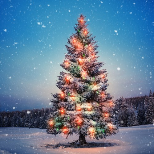 Friday Harbour Tree Lighting Ceremony + Holiday Market-event-photo