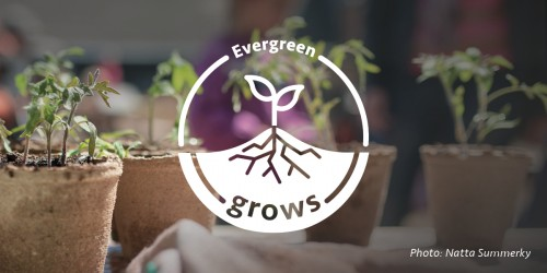 Evergreen Grows