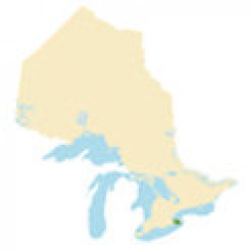 Niagara Region Region