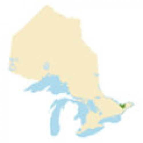 Ottawa Region Region