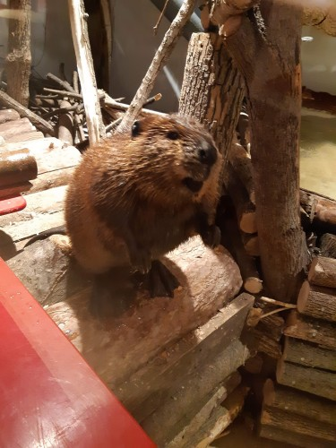 Aquatarium in Brockville - Animals & Zoos in  Summer Fun Guide