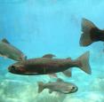 Lyndon Fishing Pond