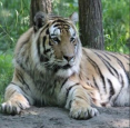 Papanack Park Zoo - New Ownership! in Wendover - Attractions in OTTAWA REGION Summer Fun Guide