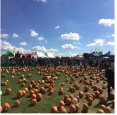 PumpkinFest - Toronto & Richmond Hill - Oct. 2018 in Toronto - Festivals, Fairs & Events in  Summer Fun Guide