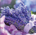 NEOB Lavender Picnic Lunch in Niagara on the Lake - Festivals, Fairs & Events in  Summer Fun Guide