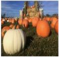Pumpkinfest Toronto & Richmond Hill - (by Superior Events)