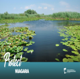 Niagara Peninsula Conservation Authority in Welland - Parks & Trails, Beaches & Gardens in  Summer Fun Guide