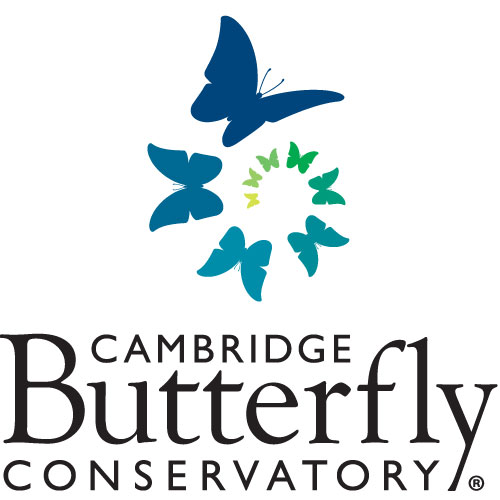 Cambridge Butterfly Conservatory in Cambridge - Animals & Zoos in  Summer Fun Guide