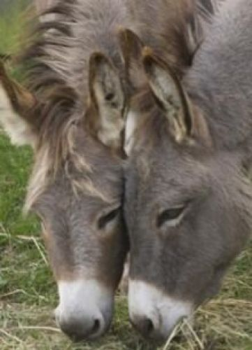 Donkey Sanctuary of Canada in Puslinch - Animals & Zoos in  Summer Fun Guide