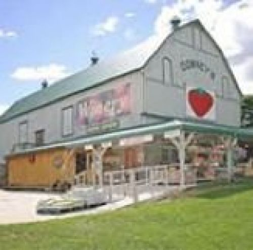 Downey's Farm & Estate Winery in Caledon - Fun Farms, U-Pick & Markets in  Summer Fun Guide