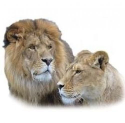 Jungle Cat World Zoological Park and Bed & Breakfast in Orono - Animals & Zoos in  Summer Fun Guide
