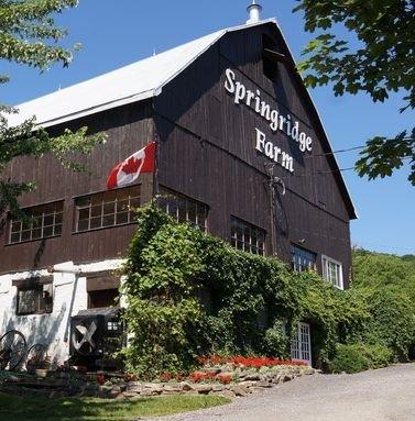 Springridge Farm in Milton - Fun Farms, U-Pick & Markets in  Summer Fun Guide